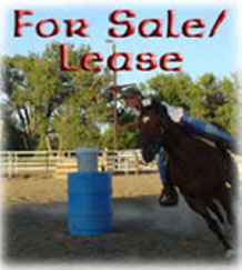 Horses For Sales or Lease
