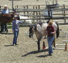 Photo of course drills during Academy of Natural Horsemanship Class